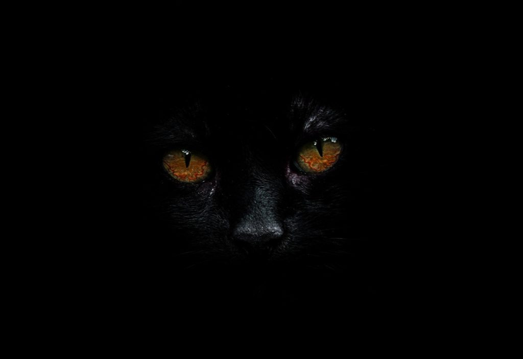 the black cat edgar allan poe